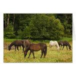 Pâturage de l'anniversaire de chevaux carte de vœux