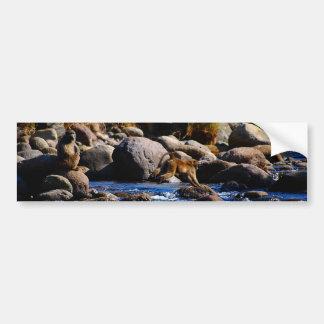 Paviane, die den Fluss kreuzen Autoaufkleber