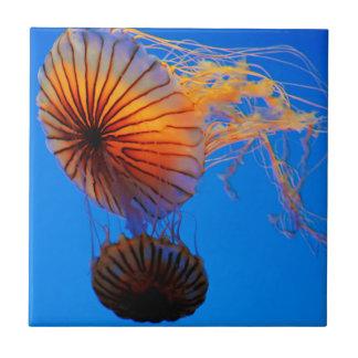Pazifische Seenessel (Chrysaora Fuscescens) Fliese