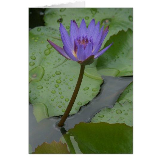 Pazifische Wasser-Lilie (Nymphaeceae) Grußkarte