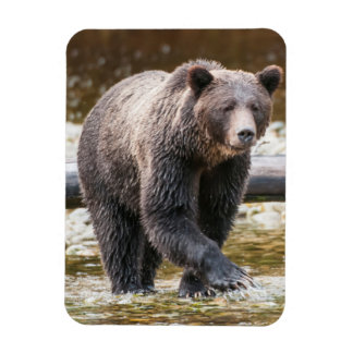 Pêche de Brown ou d'ours gris (Ursus Arctos) Magnet Souple