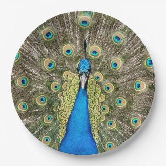 Pedro-Pfau versieht bunten wilden Vogel-Pfau mit Pappteller 22,9 Cm