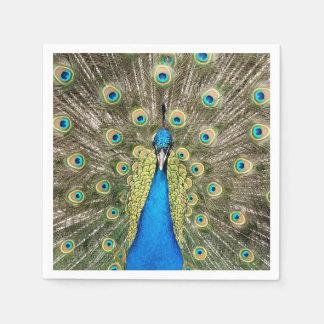 Pedro-Pfau versieht bunten wilden Vogel-Pfau mit Serviette