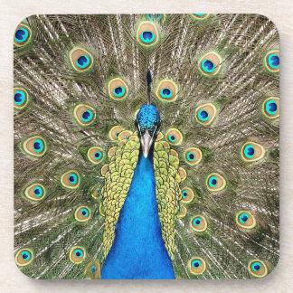 Pedro-Pfau versieht bunten wilden Vogel-Pfau mit Untersetzer