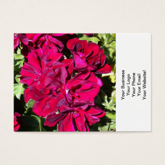 Pelargonie-Blumen-Rot Visitenkarte