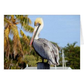Pelikan am Krug-Nebenfluss Karte