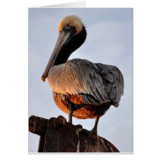 Pelikan am Sonnenuntergang Karte
