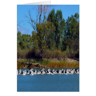 Pelikan-Fischen-Raserei, Fluss Murray, Karte