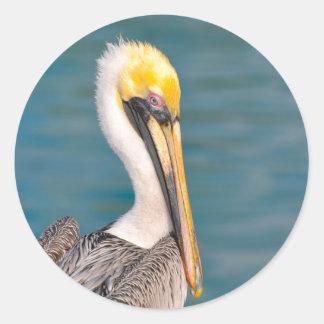 Pelikan-Porträt nah oben mit Ozean im Hintergrund Runder Aufkleber
