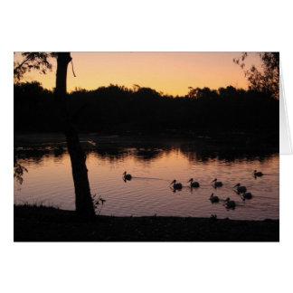 Pelikane am Sonnenuntergang Karte