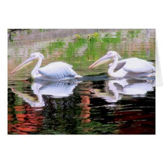 Pelikane, die in einem See schwimmen Karte