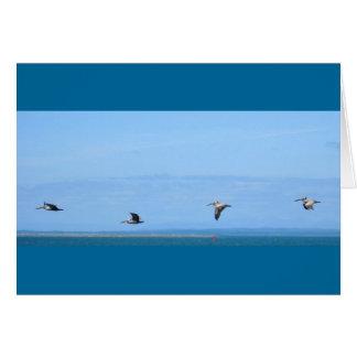 Pelikane Karte