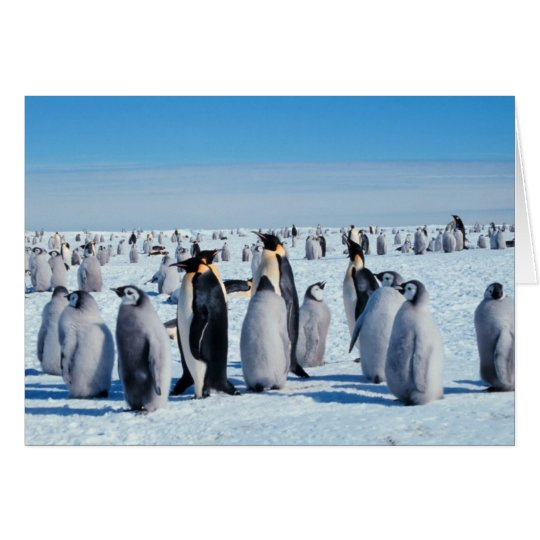 Penguin-Ansammlung Grußkarte
