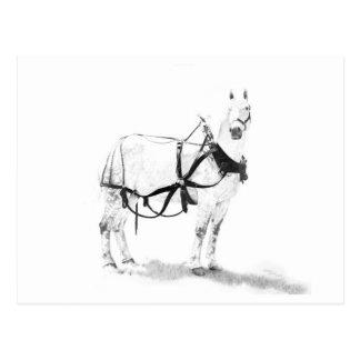 Percheron Entwurfs-Pferdepferdeartige Postkarte
