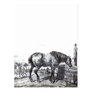 Percheron PferdeVintage zeichnende Kunst Postkarte