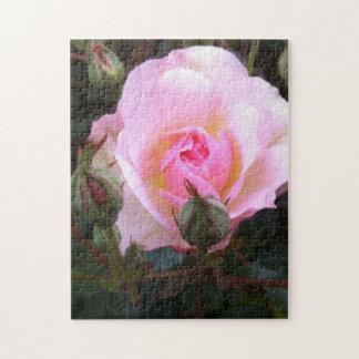 Perfekte englische Rose