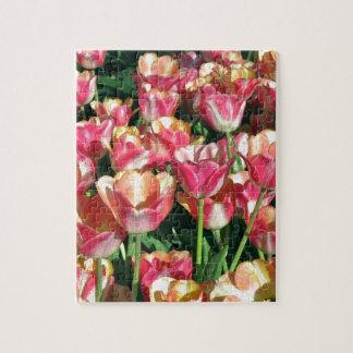 Perfekte Rosa-und Pfirsich-Tulpen