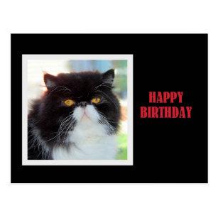 Geburtstags Der Persischen Katze Karten Zazzle Ch