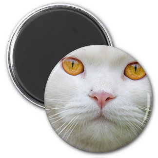 Persische Katzen-Kühlschrankmagnet Runder Magnet 5,7 Cm