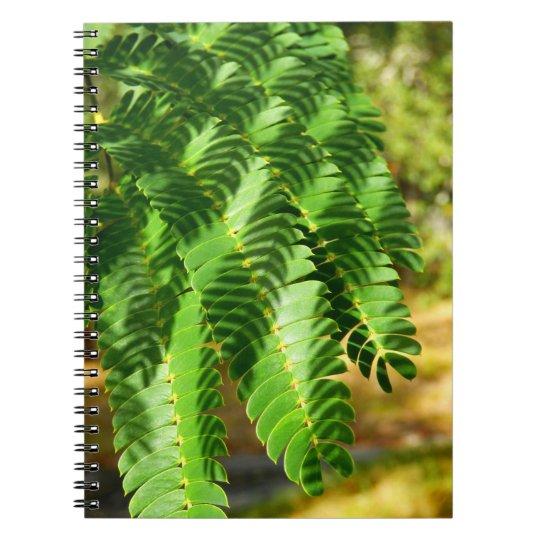Persischer Silk Baum verlässt Foto-Notizbuch Notizblock