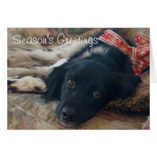 Personalisiertes Bretagne-Hundefeiertag Notecard Karte