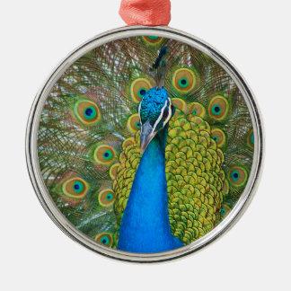 Pfau-Blau-Kopf mit und bunte Schwanz-Federn Rundes Silberfarbenes Ornament