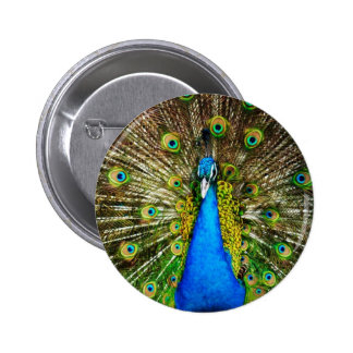 Pfau-Button Runder Button 5,1 Cm