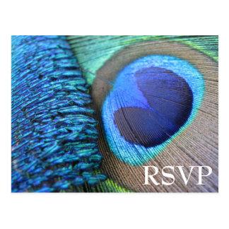Pfau-Feder UAWG Postkarte