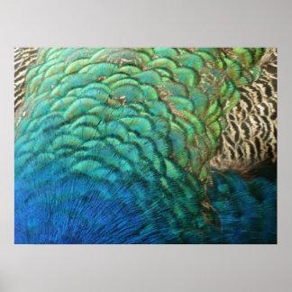Pfau versieht bunten abstrakten Natur-Entwurf I Poster