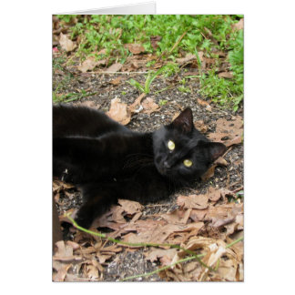 Pfeffer-Katzen-Katrina-Überlebender Karte