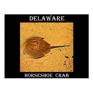 Pfeilschwanzkrebs Delawares Postkarte