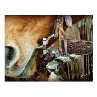 Pferd gebissen u. Bügel auf Pferd Postkarte