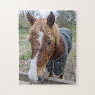 Pferd herauf nahes Fotopuzzlespiel