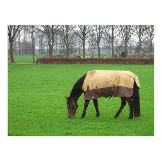 Pferd in der Wiesen-Postkarte Postkarte