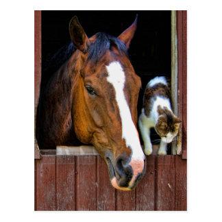 Pferd und Katze Postkarte