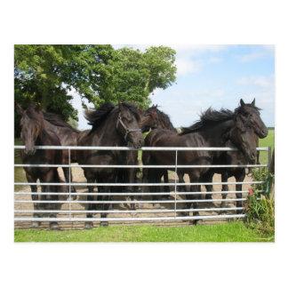 Pferde an der Zaun-Postkarte Postkarte