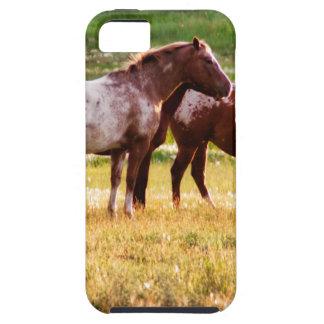 Pferde auf Weide Hülle Fürs iPhone 5
