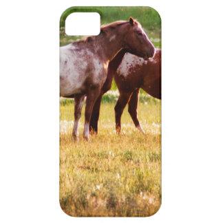Pferde auf Weide Schutzhülle Fürs iPhone 5