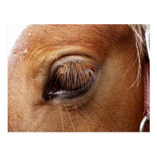 Pferde-/Pony-Augen-nahes hohes - Postkarte