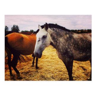 Pferde - Postkarte