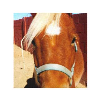 Pferde sind eine BESTE FREUNDIN der Mädchen auf Leinwanddruck