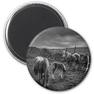 Pferde und Pony-Magnet Runder Magnet 5,1 Cm