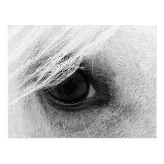Pferdeauge in Schwarzweiss Postkarte