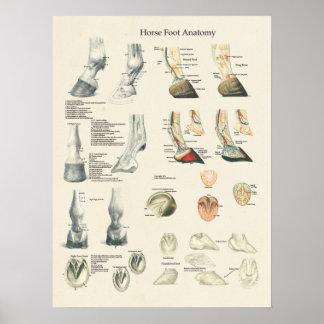 Pferdefuß-Huf-Bein-Anatomie-Hufschmied-Diagramm Poster