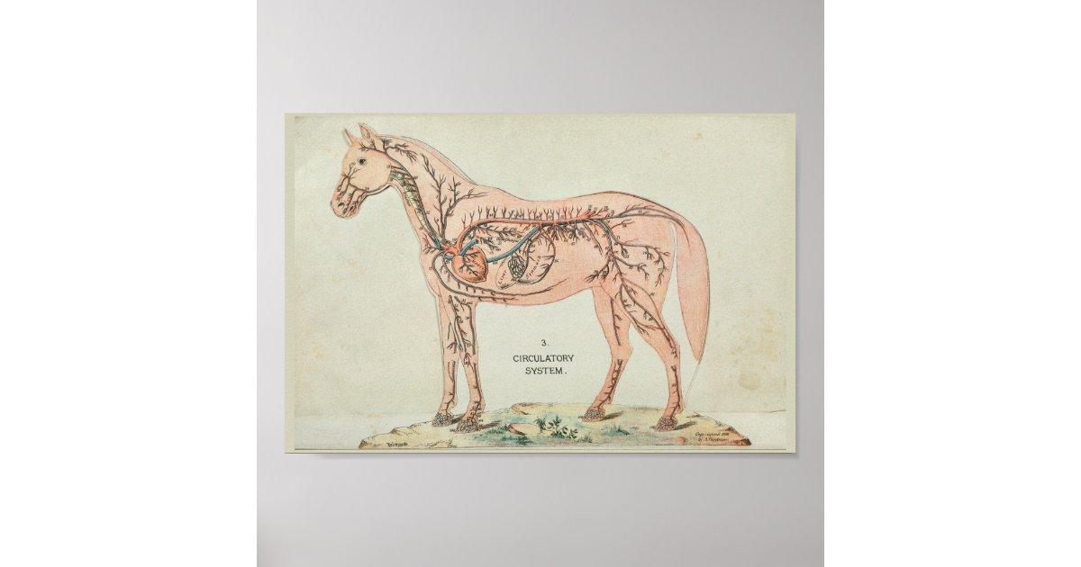 Tolle Pferdeherz Anatomie Ideen - Anatomie Ideen - finotti.info