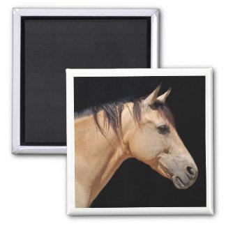 Pferdekopf-Magnet Quadratischer Magnet