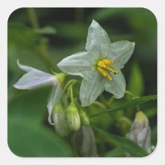 Pferdenessel-weiße Wildblume-Quadrat-Aufkleber Quadratischer Aufkleber