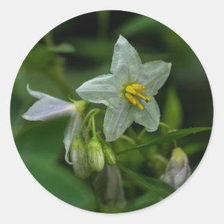 Pferdenessel-weiße Wildblume-runde Aufkleber