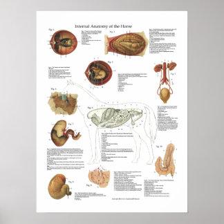 PferdeOrgan-Anatomie-Tierarzt-Diagramm Poster
