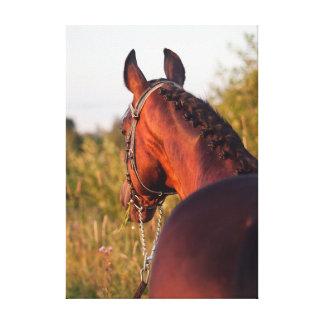 Pferdesammlung. sportiv leinwanddruck
